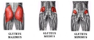 These are your glutes